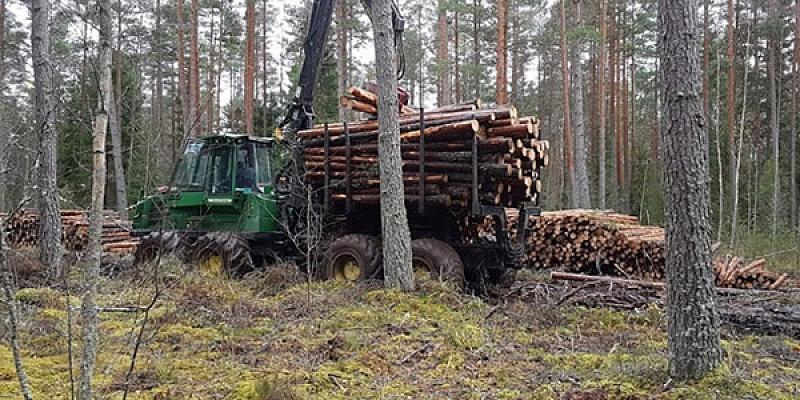 Ciršanas tiesību iepirkšana, mežizstrādes pakalpojumi