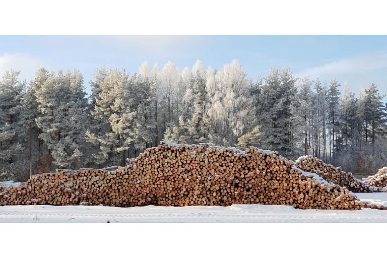 Mežizstrādes uzņēmums Kurzemē