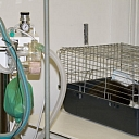 Modern equipment, surgeries for animal, hospital