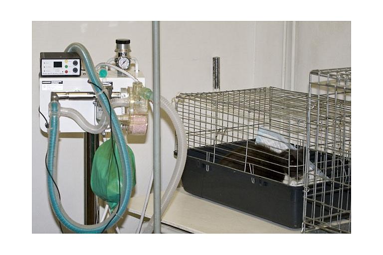 Modern equipment, animal surgery, hospital