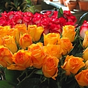 Dzeltenas un sarkanas rozes