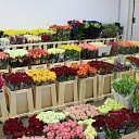Flower wholesale for weddings in Jurmala