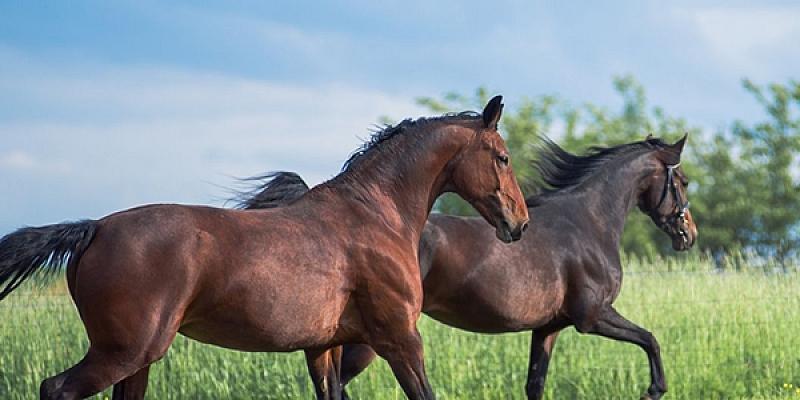 Aprīkojums zirgiem