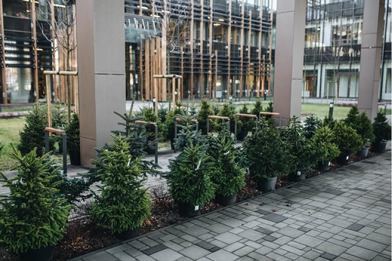 Christmas trees sale in Riga LVM