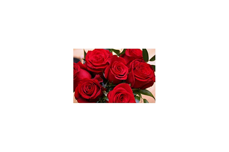 Rozes, rožu tirdzniecība Bauska