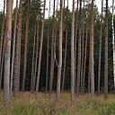 Pērkam mežus un cirsmas