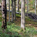 Forest, Buying of felling sites