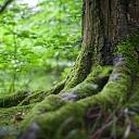 Meža pirkšana